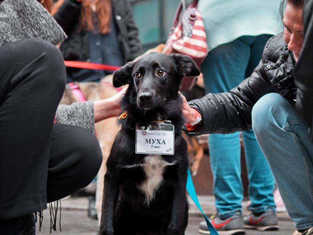 Двухдневный благотворительный фестиваль «Собаки, которые любят» фото 3