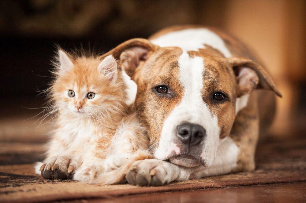 картинки собак из кошками милашка, как любоваться