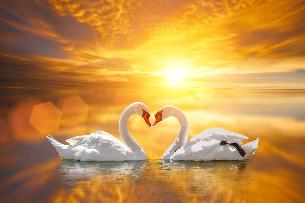 Вебинар «Любовь: точка зрения философов» фото 1