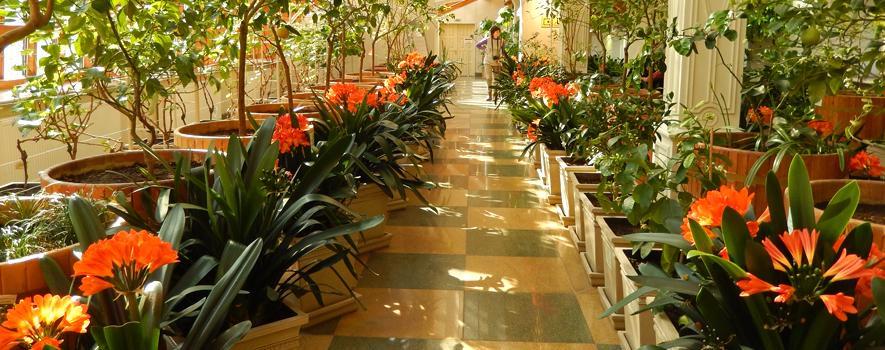 Постоянная экспозиция Царицынских оранжерей «От субтропиков до пустыни»