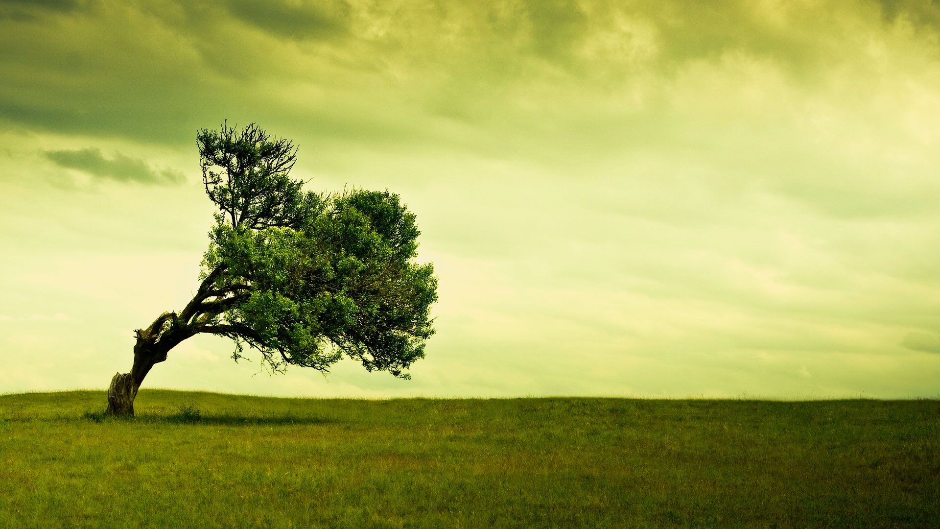 Раскидистое дерево на телефон