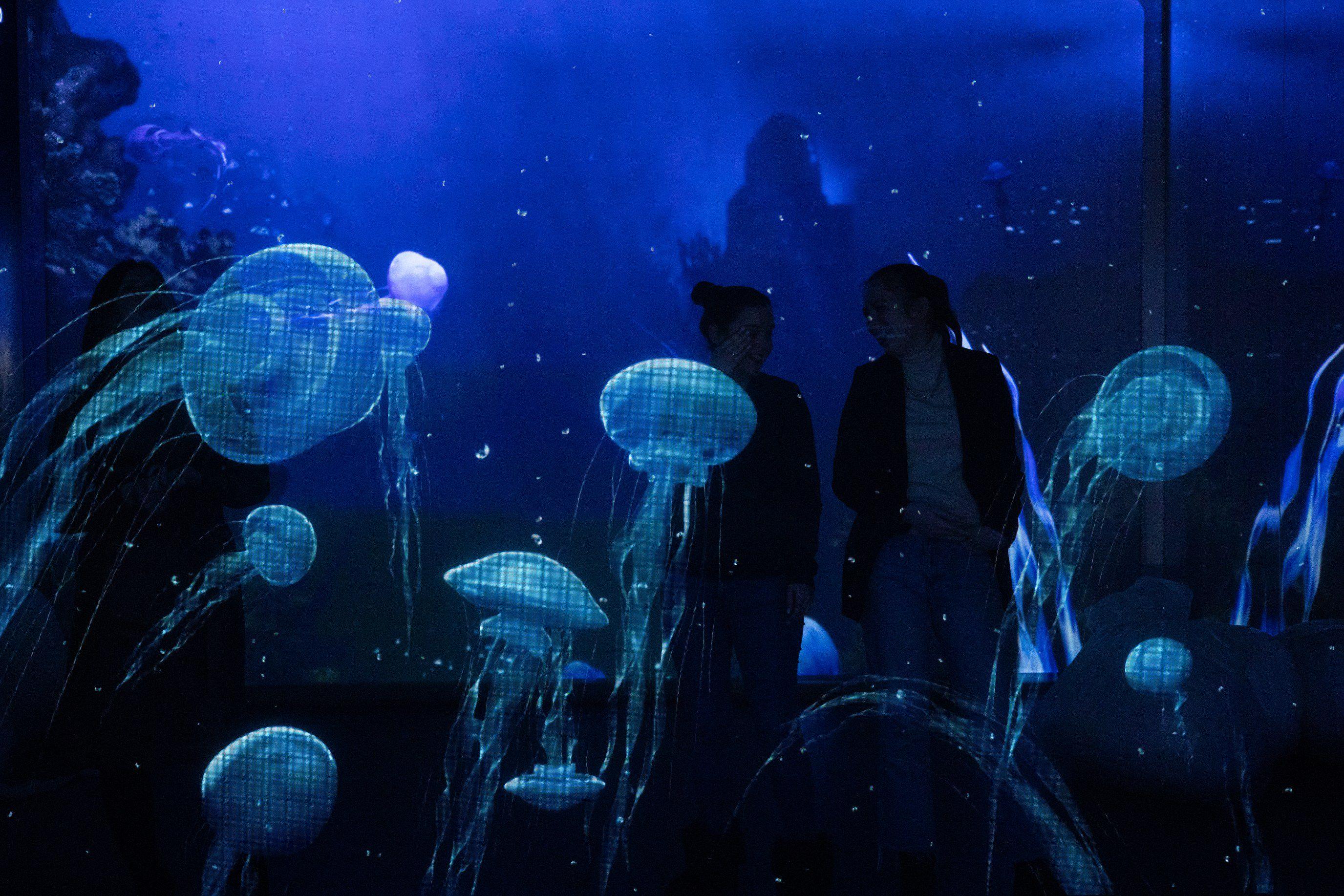 Интерактивная мультимедийная выставка «Океан юрского периода» в «Москвариуме» фото 1