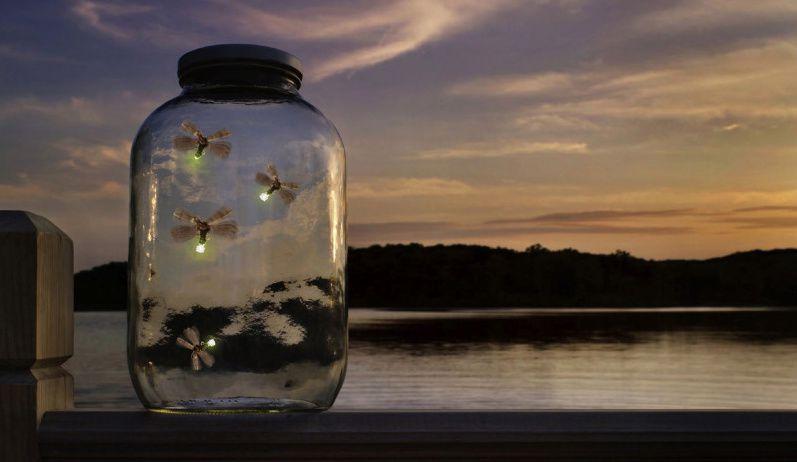 сумская картинки светлячки в банке на траве светосильных объективах