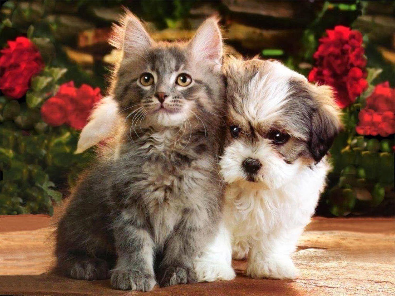 Картинки животных котят щенят