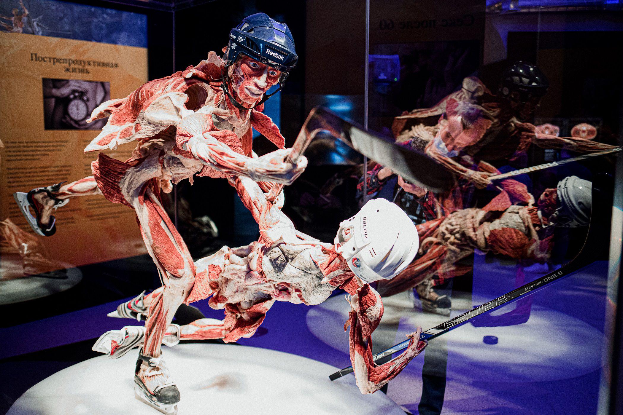 Выставка «Body Worlds. Мир тела» фото 4