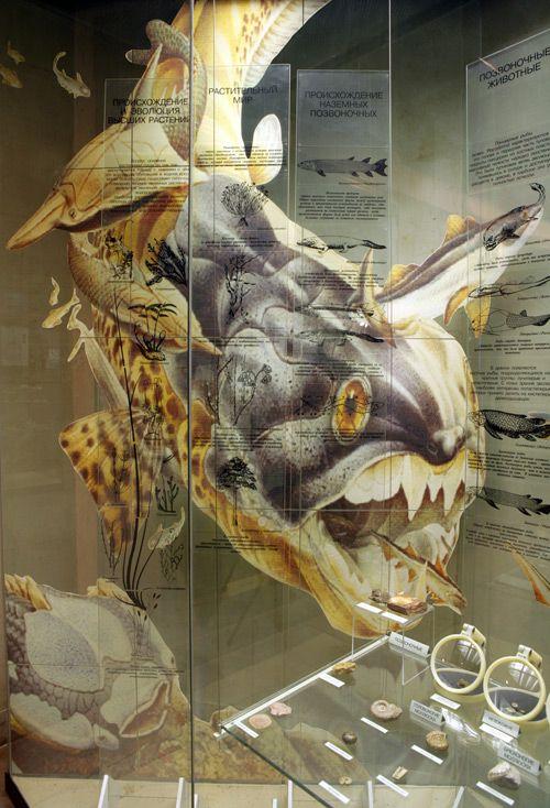 Постоянная экспозиция Дарвиновского музея «Развитие органического мира» фото 3