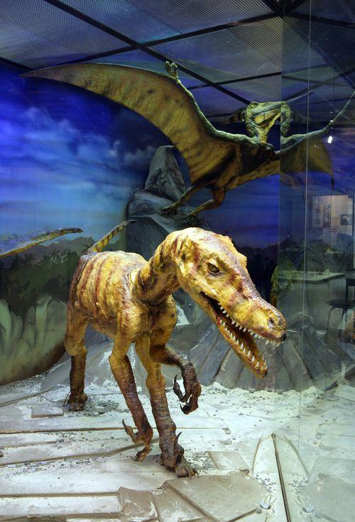Постоянная экспозиция Дарвиновского музея «Развитие органического мира» фото 5