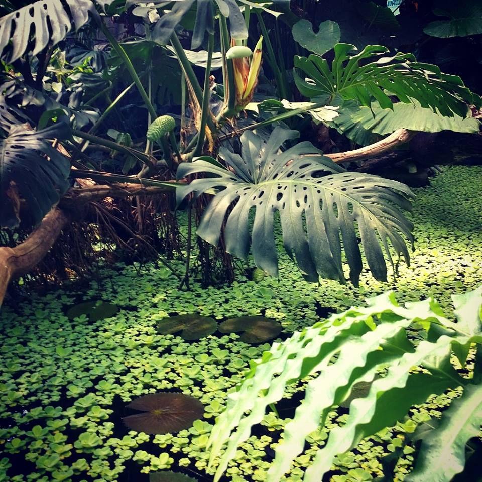 Выставка «Эдемский сад»