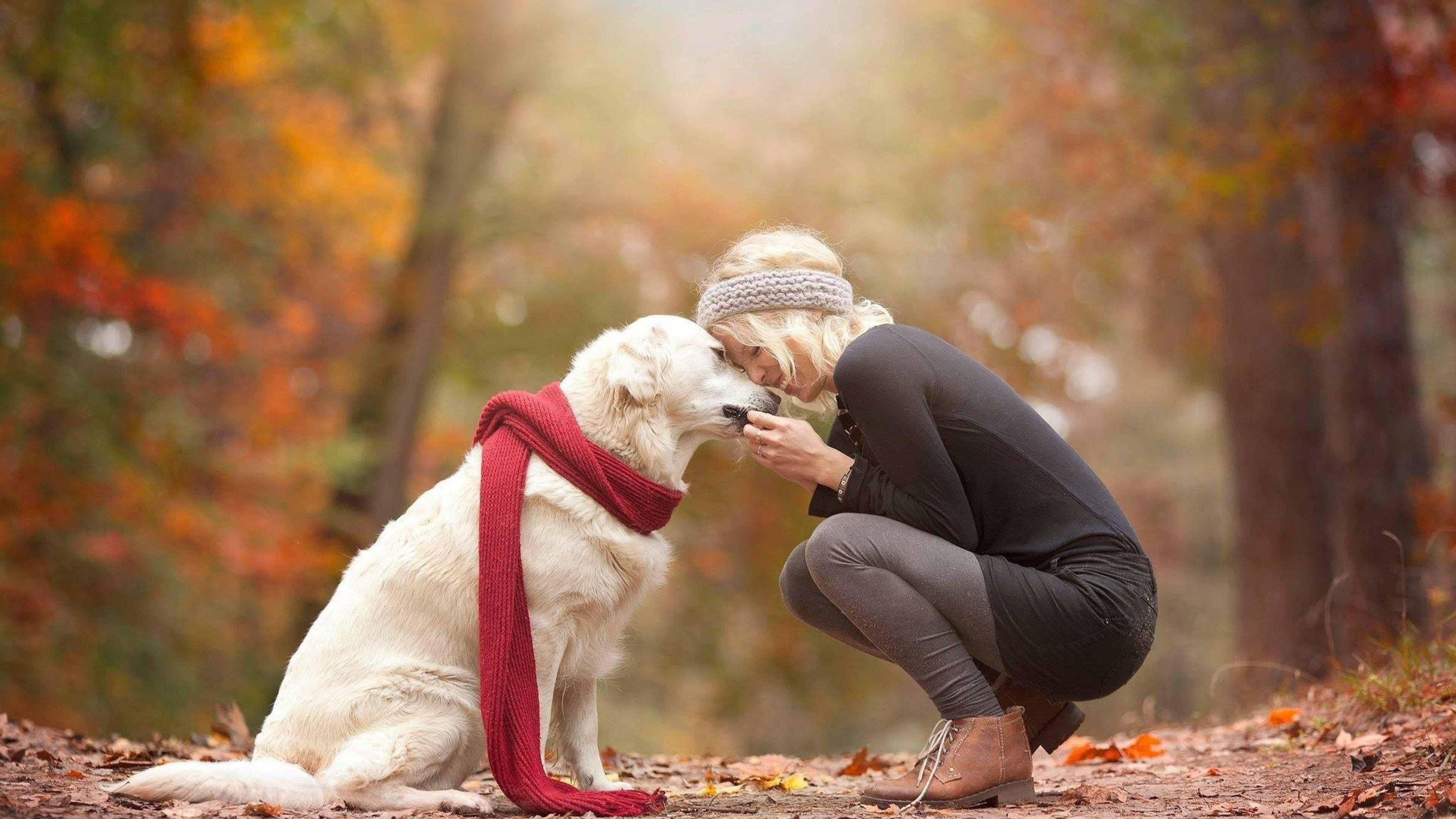 природа животные собака девочка жизнь nature animals dog girl life  № 3950982 загрузить