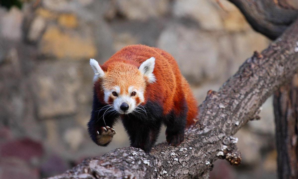 фотографии новых видов животных называется только сам
