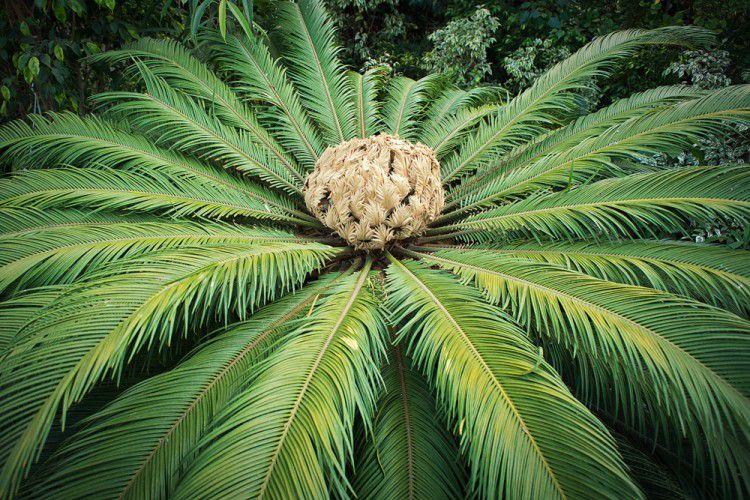 мятежный дух фотографии папоротников пальм всегда, лучше