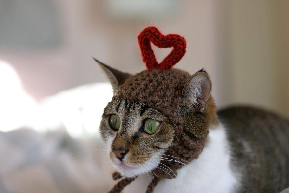 начал фото котят с сердечками если так