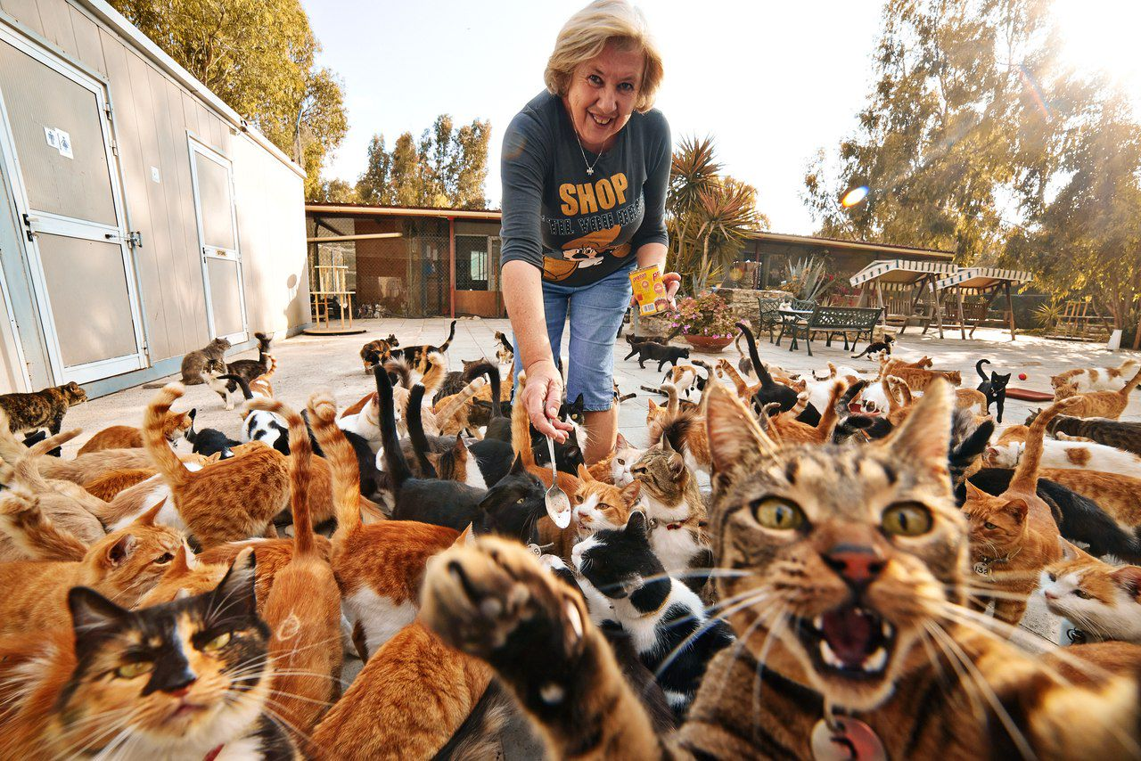 keep feral cats off property
