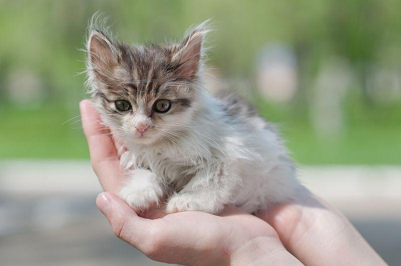 подбирать котят чему снится к