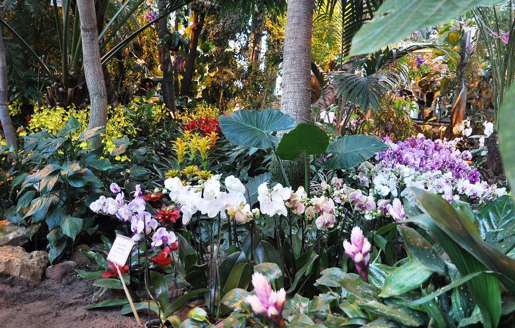 Ботанический сад киев что сейчас цветет 2018