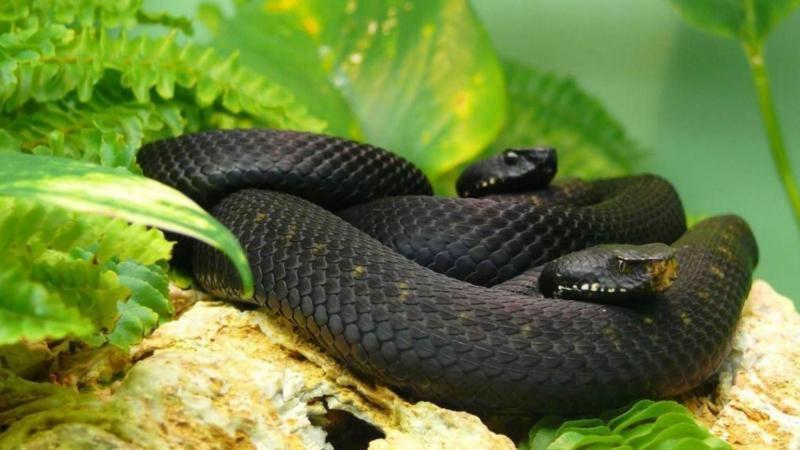 Змея фото красивое 7