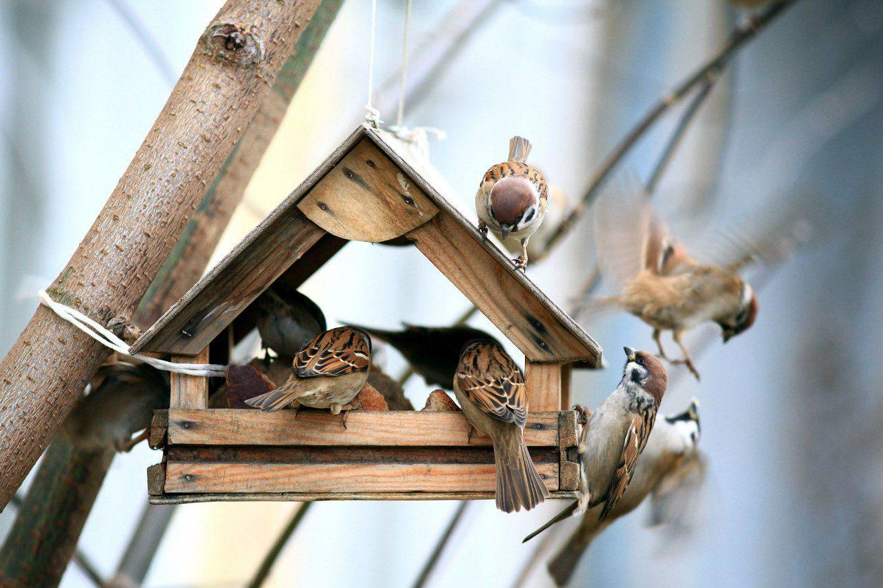 картинки птицы с кормушками аппараты дзз