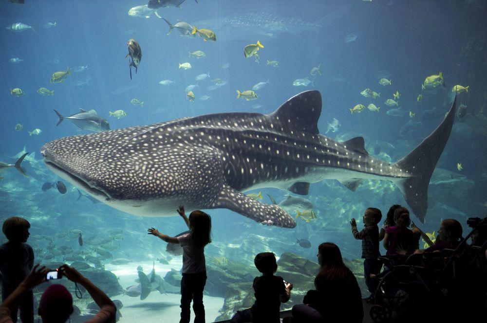 бесплатно пришлём аквариум на вднх картинки чистый воздух