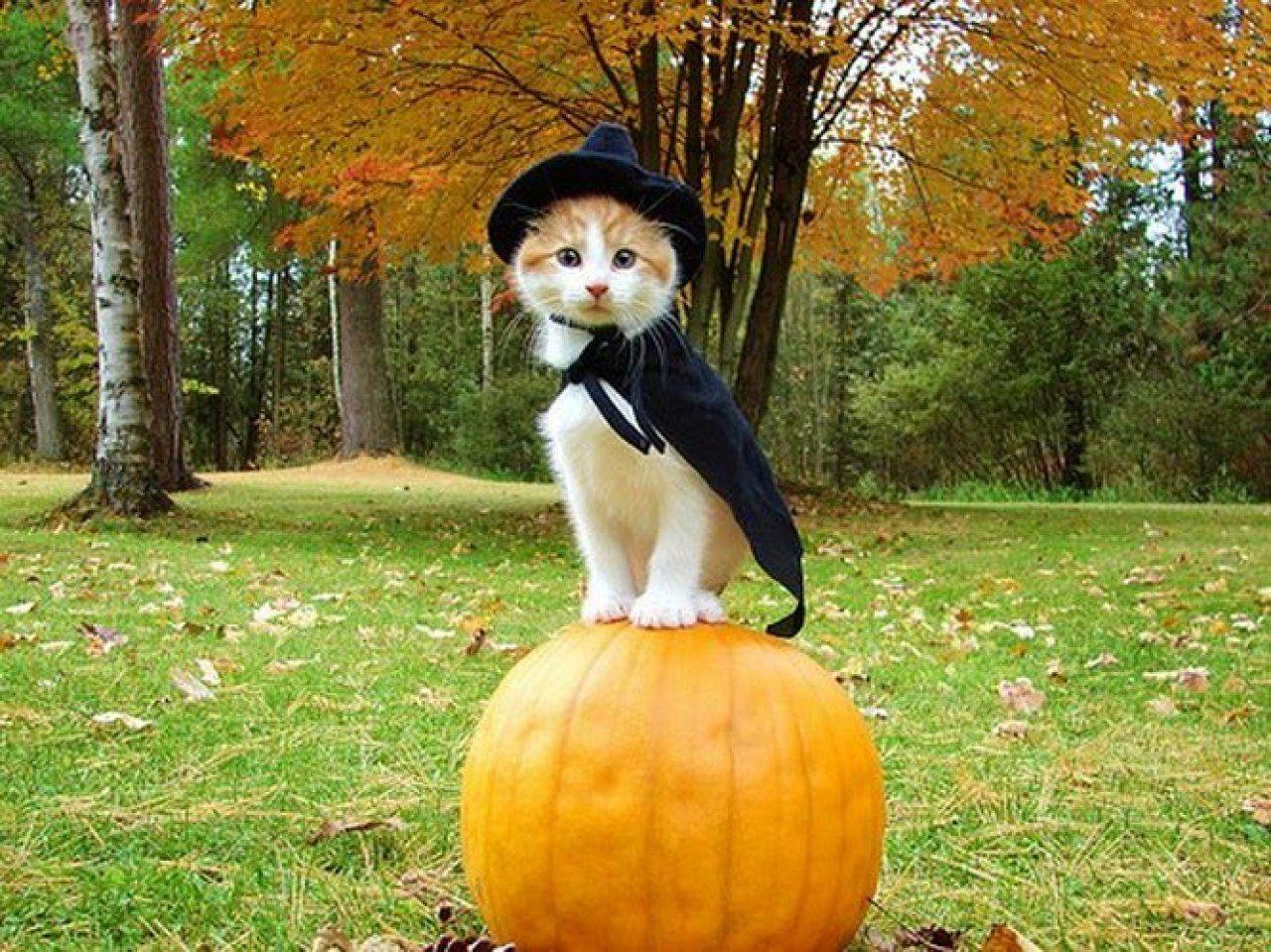 Октябрь смешные картинки