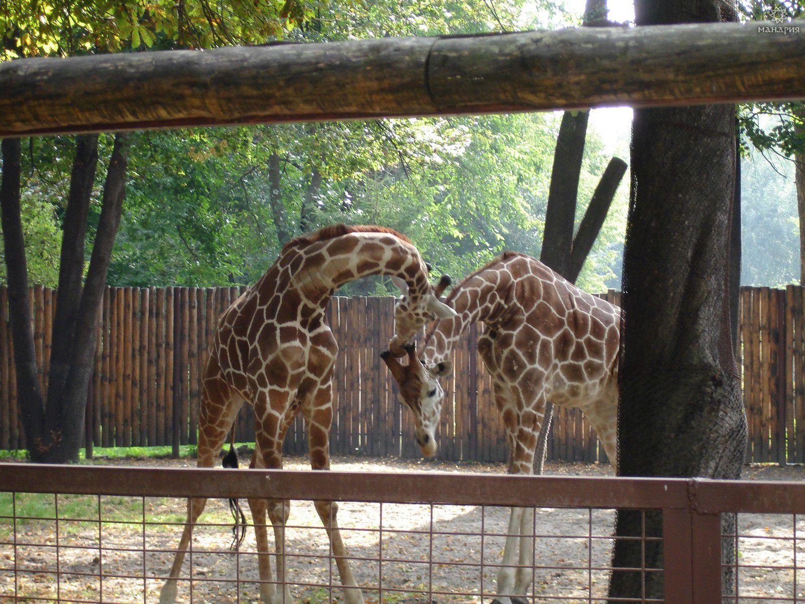 киев фото зоопарк