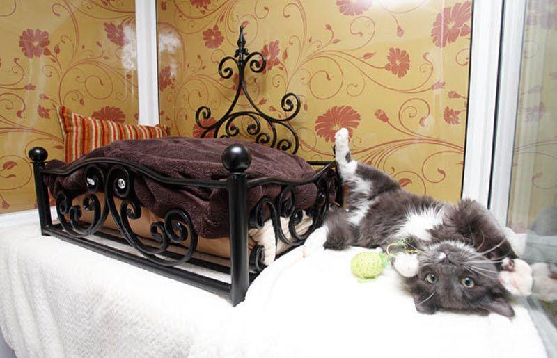 Гостиница для котов цена