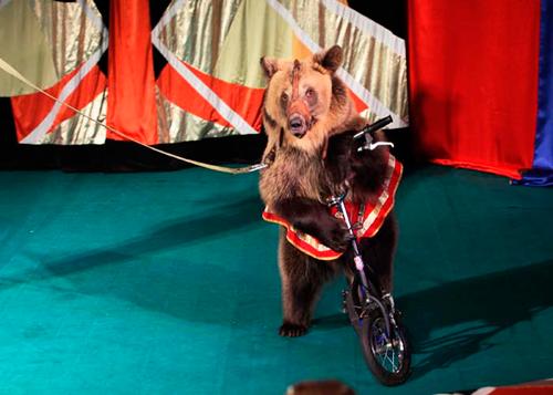 Картинки по запросу Цирк-шапито «Инантеп»