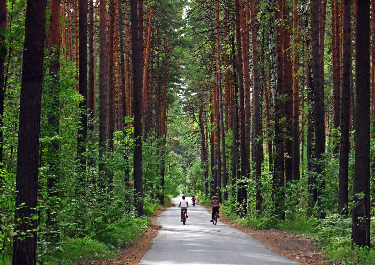 парк заельцовский новосибирск фото