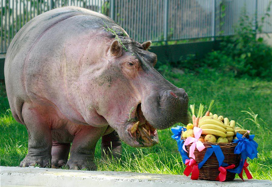 Зоопарк киев фото