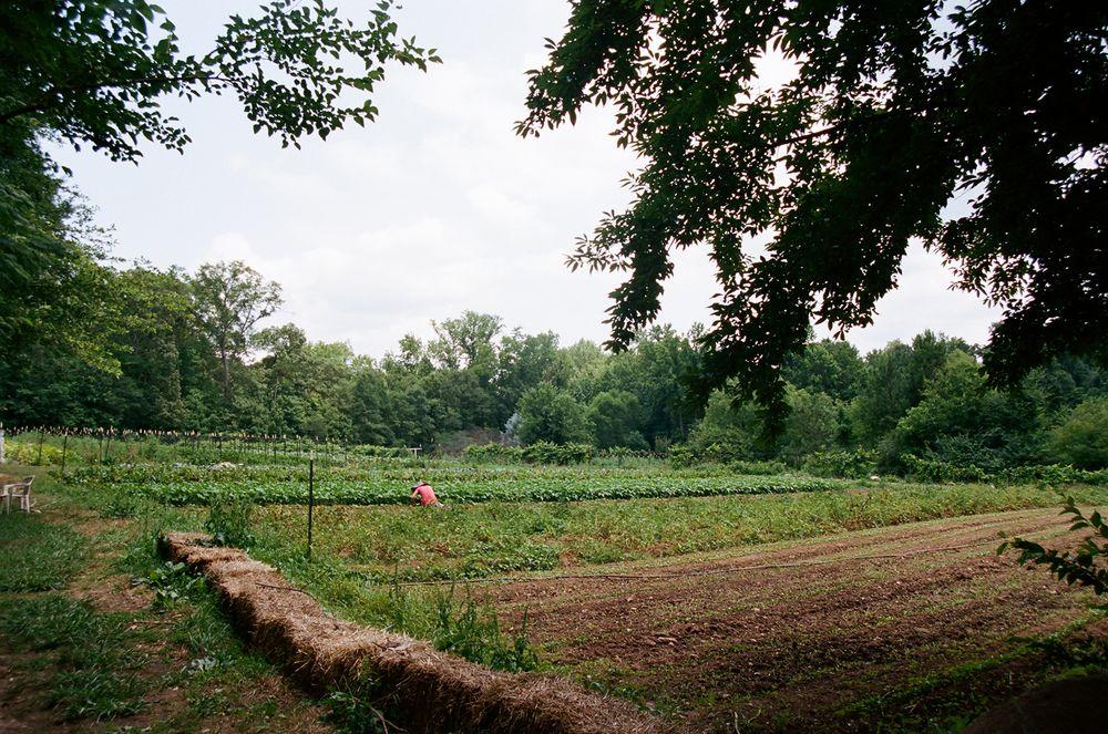 Love Is Love Farm Atlanta