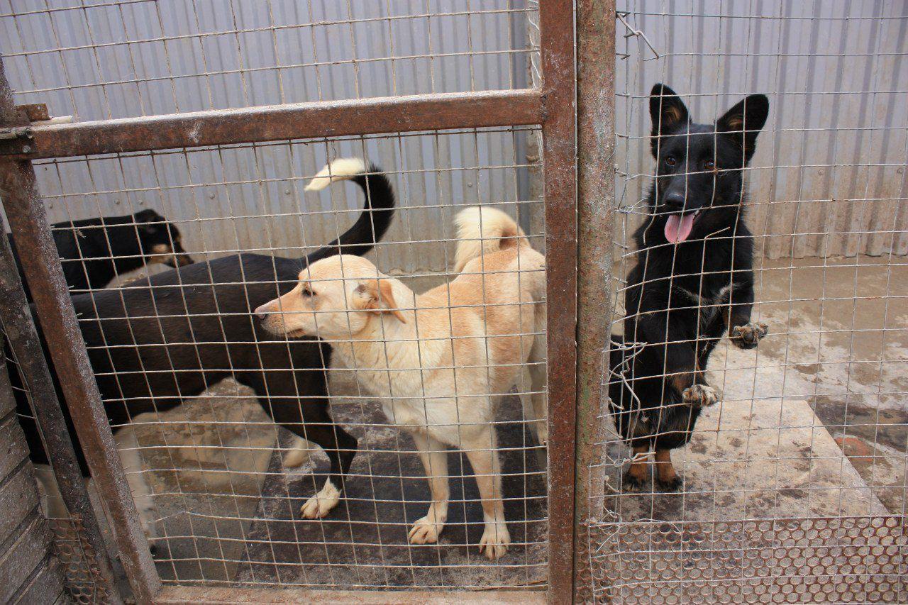 приюты для животных в краснодаре с фото ведь первый