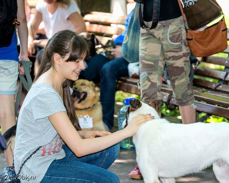 Выставка собак икошек изприюта «Улюбви нет породы»