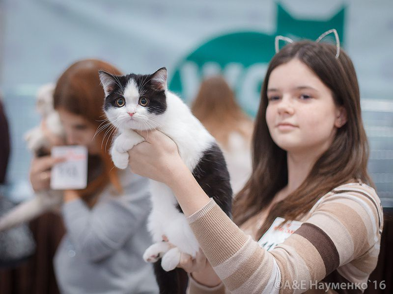 Международная выставка кошек «РосКошная зима в Сокольниках»