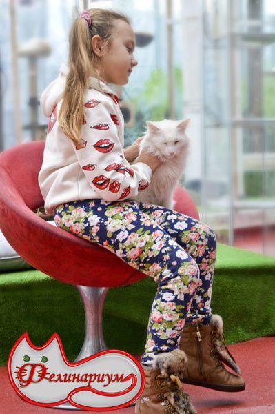 Выставка кошек Фелинариум на ВДНХ
