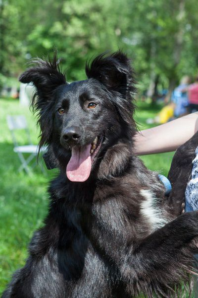 Выставка собак из приютов «Найди друга!»
