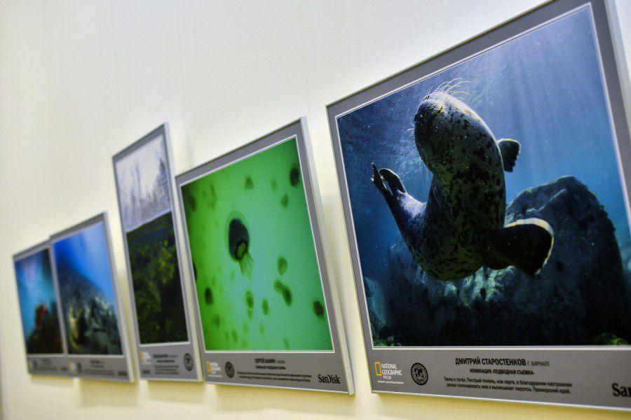 Выставка фотографии «Дикая природа России 2015»