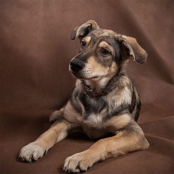 Фестиваль приютских собак и кошек «Домой!»