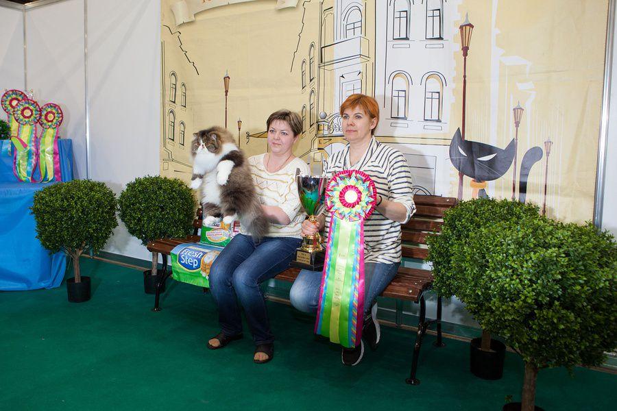 Международная выставка кошек «Кэтсбург»