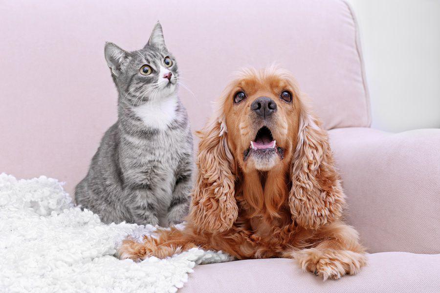 Выставка собак и кошек из приютов «Домой!»
