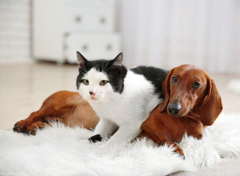 Фестиваль собак и кошек из приютов Woof