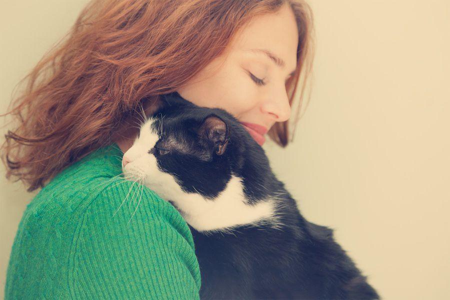 Выставка кошек из приютов «Юна-фест»