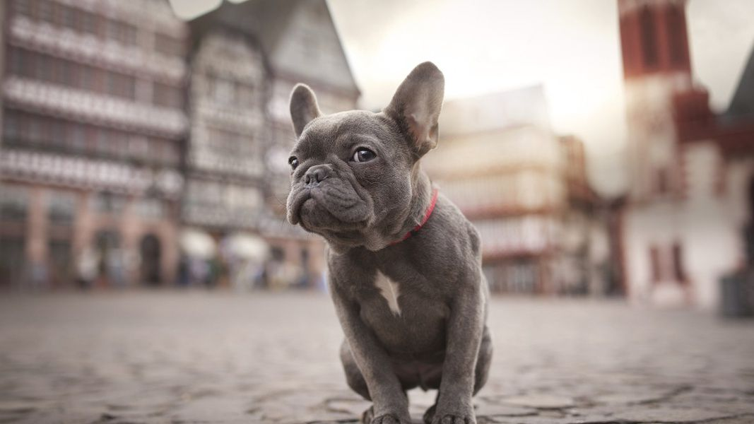 Благотворительный фестиваль «Собаки в городе»
