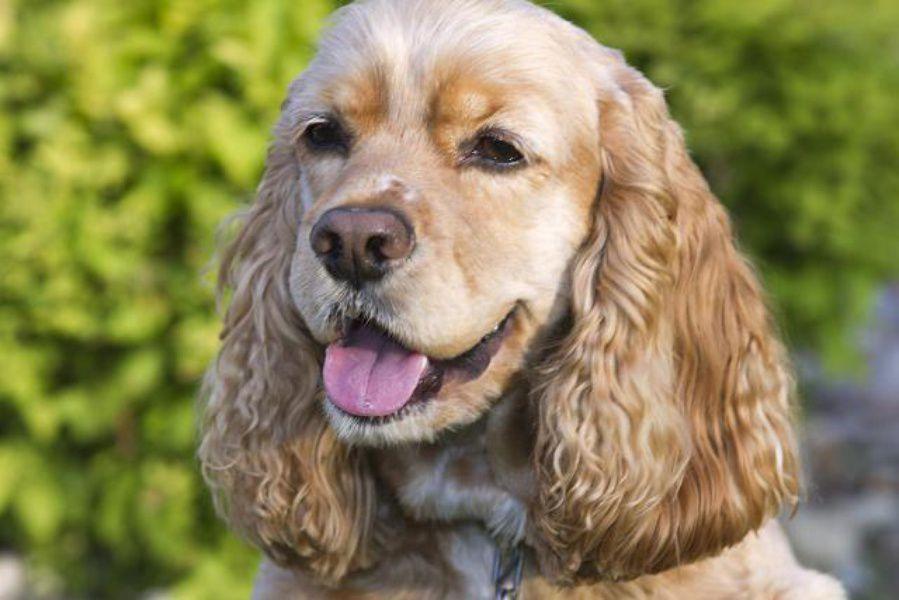 Национальная выставка собак всех пород