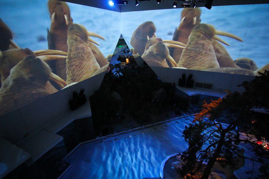 День города в Дарвиновском музее