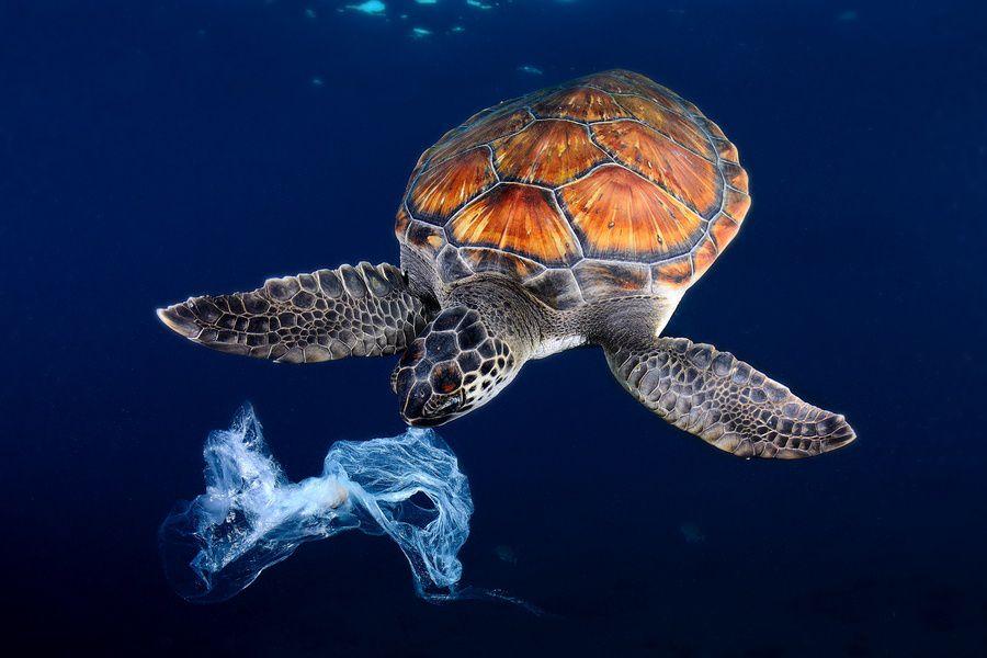 Международный фестиваль дикой природы «Золотая черепаха»