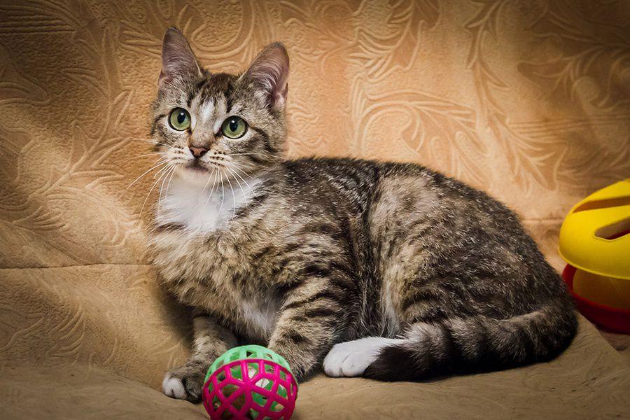Выставка-пристройство кошек и собак из приютов «Пушистые лапки ищут дом»