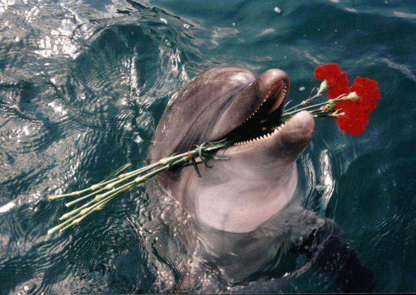 В Сочи начались съемки телешоу со «звездами» и дельфинами