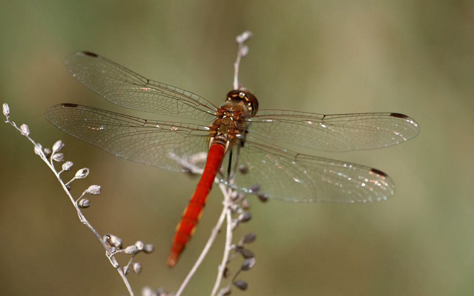 ВГермании загадочно пропали практически все насекомые— Экологи бьют тревогу