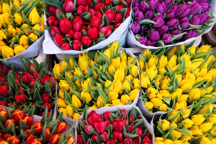 Неменее 20 городских павильонов «Цветы» установят в столицеРФ доконца года