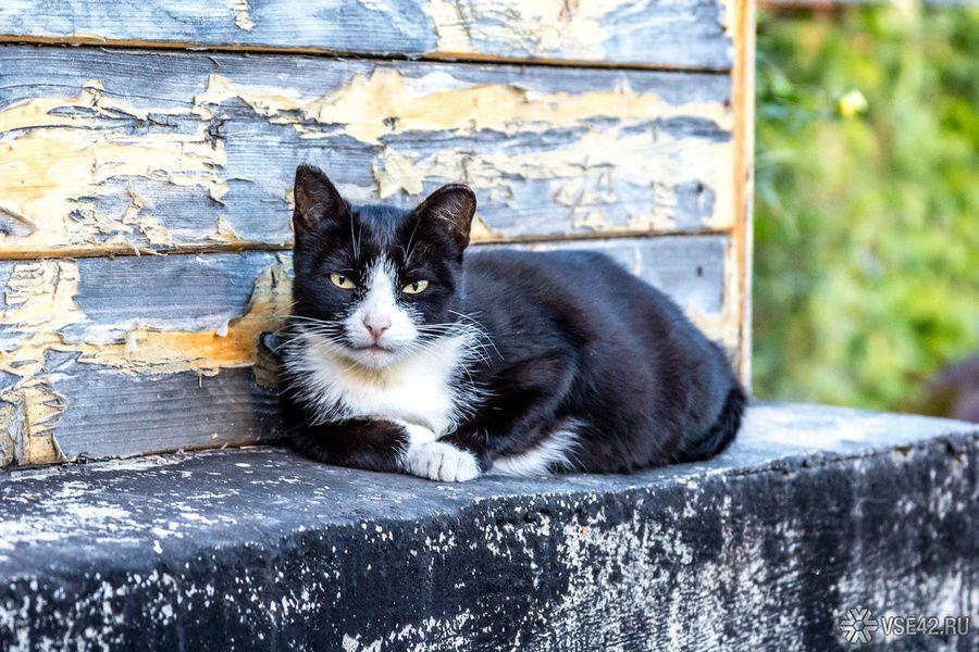 Подвалы оставят открытыми для бездомных кошек и собак