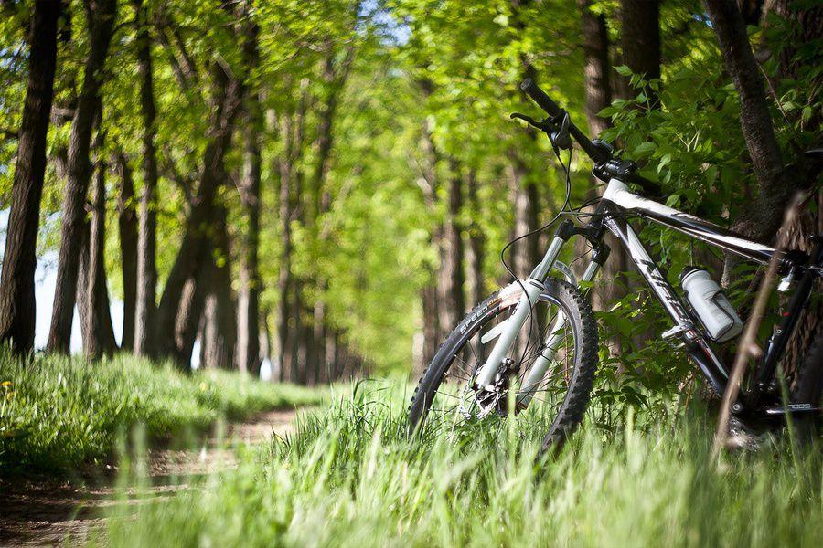 Сеть велодорожек заработает вмосковском парке «Коломенское» коДню города